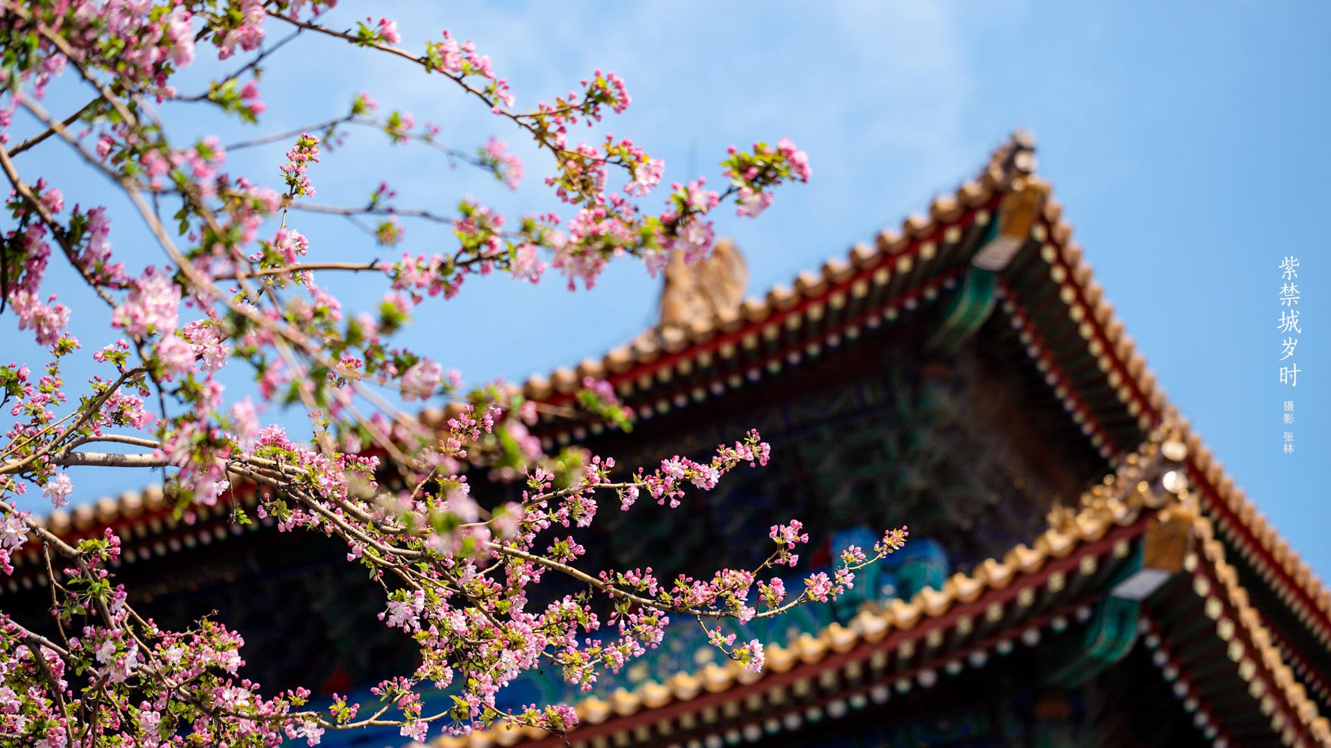 紫禁城岁时 故宫博物院 故宫壁纸